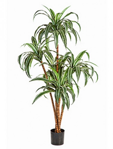 Dracaena Tree Kunstbaum