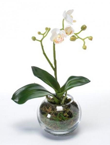 Phalaenopsis mit Moos | Orchideen Kunstpflanze im Glas 30 cm