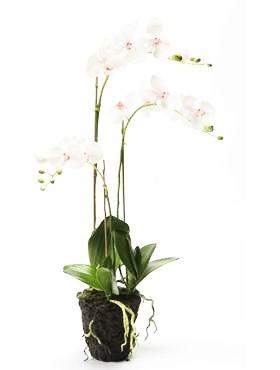 Phalaenopsis 75 cm Pink - Orchideen Kunstpflanze