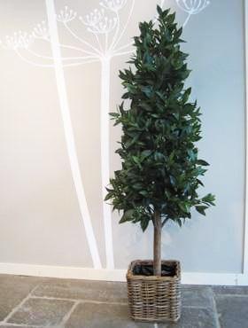 Laurus Pyramide - Gewürzlorbeer Kunstpflanze