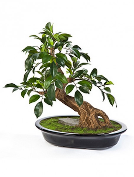 Ficus folia - Kunstbonsai 40 cm