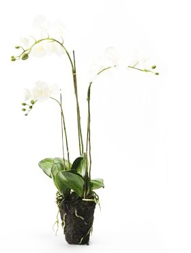 Phalaenopsis 75 cm Weiß - Orchideen Kunstpflanze