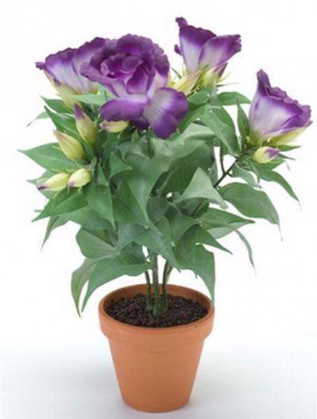 Lisianthus lila 11 cm | Tulpenrose Kunstpflanze im Topf