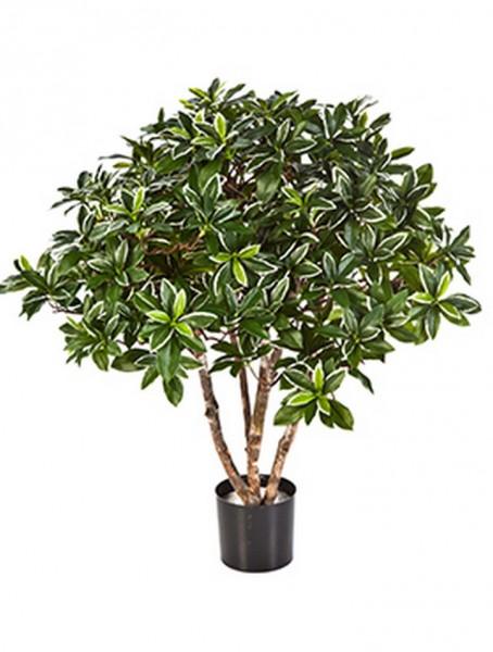 Euonymus japonicus - Kunstbuchsbaum 75 cm