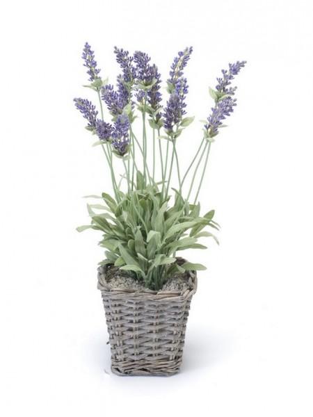 Lavendelbusch im eckigen Körbchen 45 cm