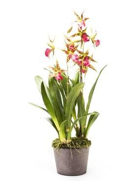 Oncidium Pink 75 cm - Orchideen Kunstpflanze