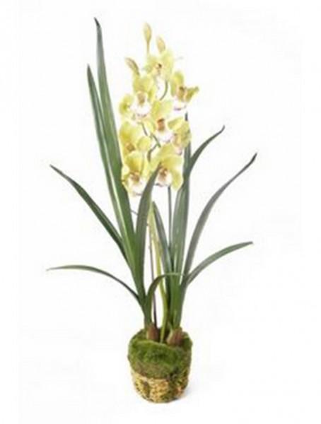 Cymbidium hellgrün 95 cm | Orchideen Kunstpflanze mit Moos