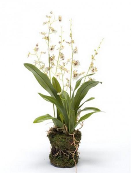 Dancing orchid 50 cm | Oncidium Kunstpflanze weiß