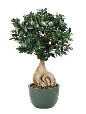 Ficus microcarpa ginseng 50 cm - Bonsai Kunstpflanze