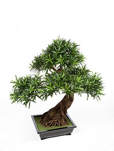 Podocarpus Kunstbonsai 80 cm