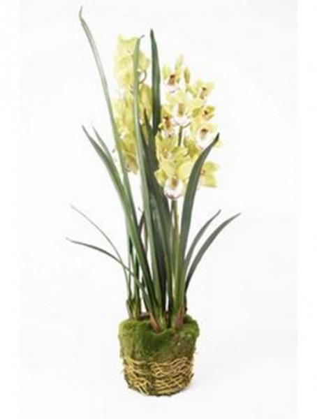Cymbidium hellgrün 100 cm | Orchideen Kunstpflanze mit Moos