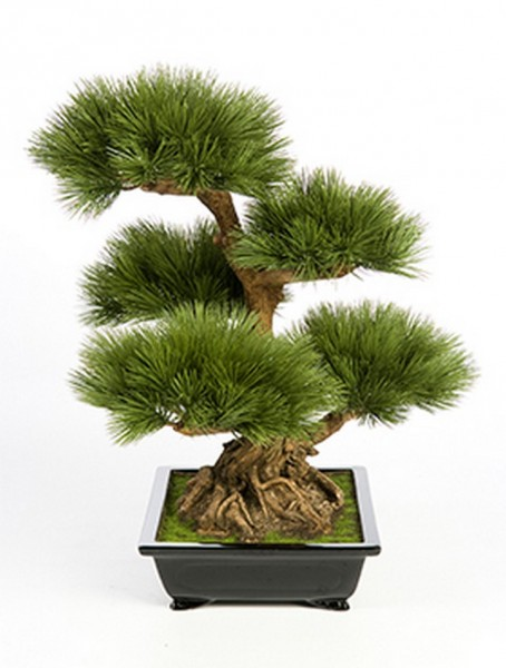 Pinus bonzai tree - Kunstbonsai 60 cm