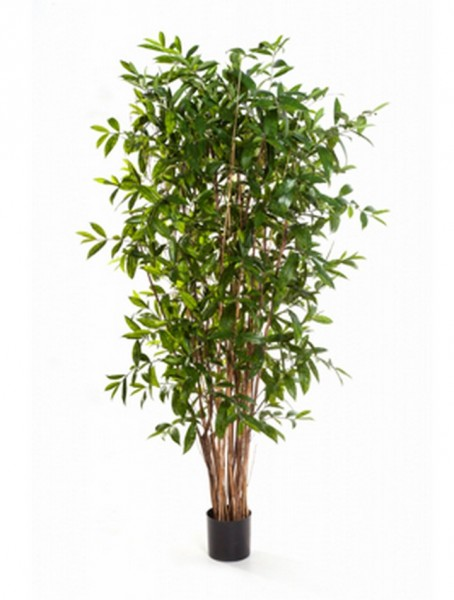 Dracaena surculosa Kunstbaum