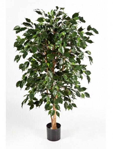 Ficus nitida exotica | Birkenfeige Kunstbaum