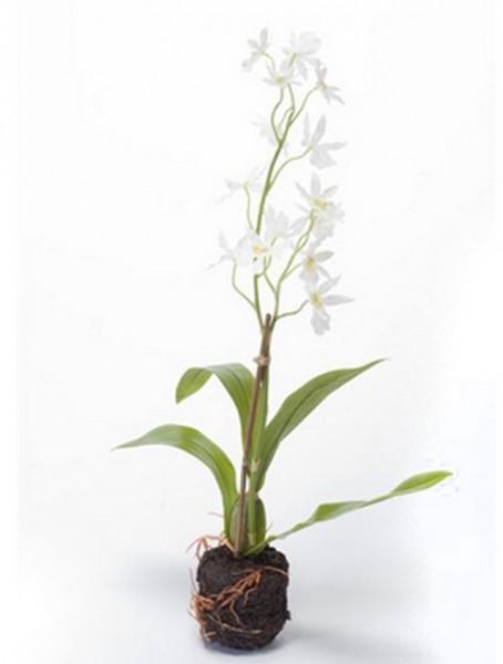 Oncidium Solidwhite | Orchideen Kunstpflanze  40 cm