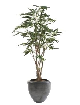 Ficus alii 180 cm - Kunstpflanze
