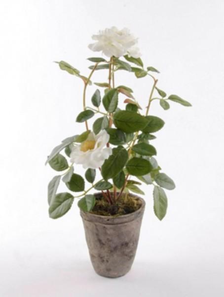 Rose patio cremeweiß 35 cm | Kunstpflanze im Antiktopf