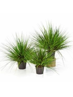 Grass onion - Zwiebelgras Kunstpflanze
