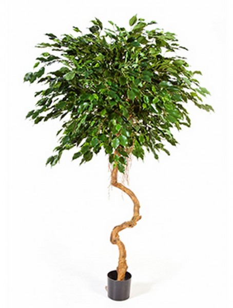 Ficus exotica crazy spiral - Kunstbaum 180 cm