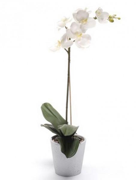 Phalaenopsis weiß 13 cm | Orchideen Kunstpflanze im weißen Topf