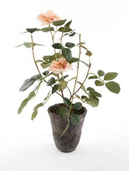 Rose patio peach 35 cm | Kunstpflanze im Antiktopf