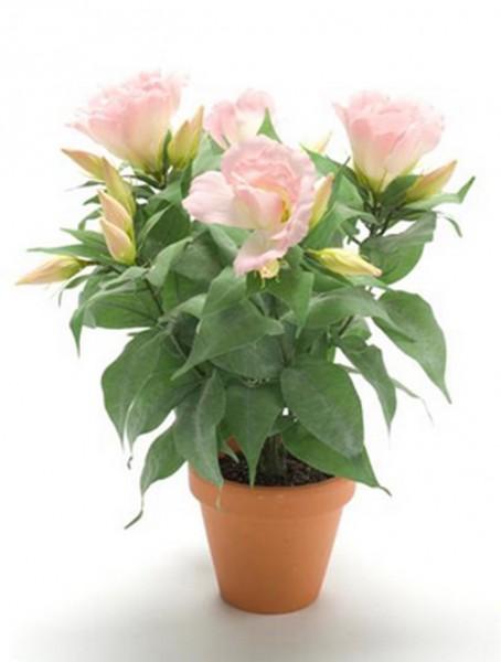 Lisianthus pink 11 cm | Tulpenrose Kunstpflanze im Topf