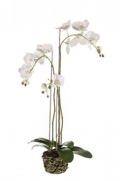 Phalaenopsis Kunstpflanze white soiled w. roots 80cm