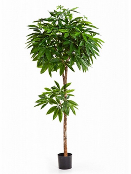 Pachira - Glückskastanie Kunstpflanze