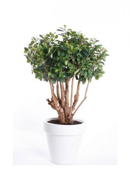 Ficus Panda Tree 70 cm Feigen Kunstbaum