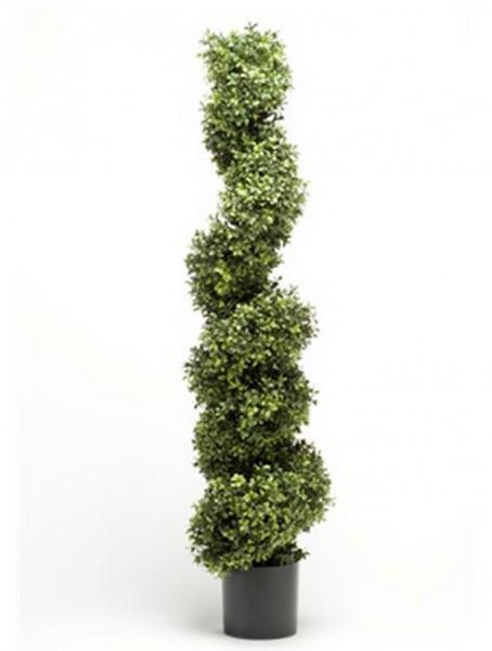 Boxwood 150 cm l Buchsbaum Spirale