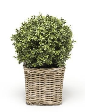 Buxuskugel | Kunstpflanze im Rattantopf