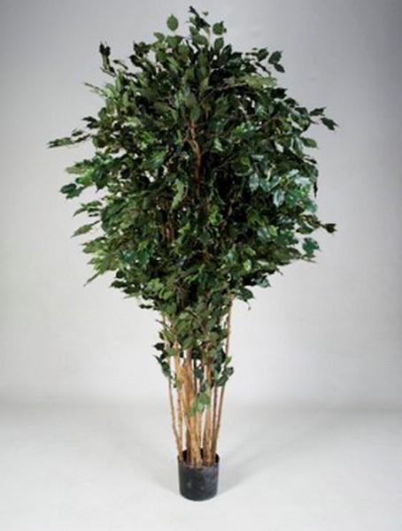 Ficus exotica Multistamm 180 cm - Kunstpflanze