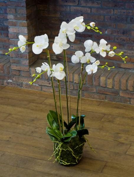 Phalaenopsis moss white 90 cm | Orchideen Kunstpflanze
