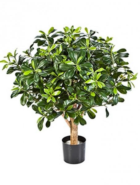 Pittosporum treeball 65 cm - Kunstbaum
