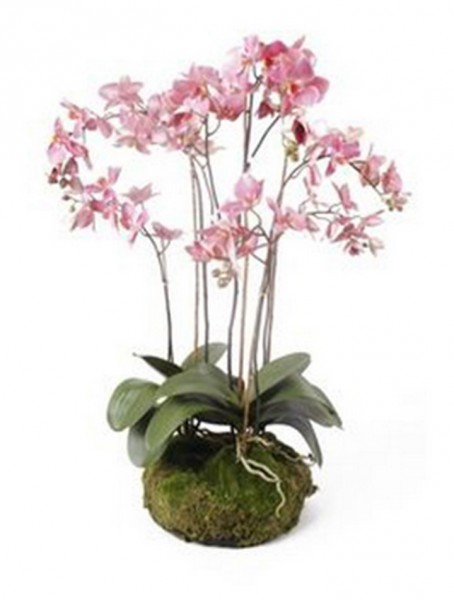 Phalaenopsis pink 75 cm | Orchideen Kunstpflanze mit Moos