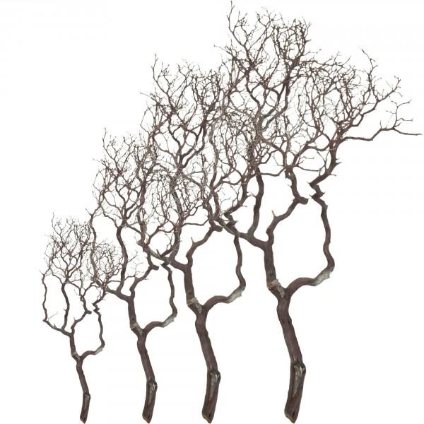 Manzanita natur braun   Dekoholz