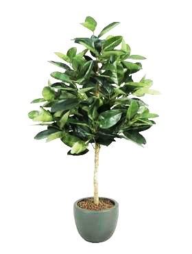 Ficus elastica 180 cm - Kunstpflanze