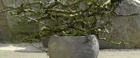 Keramik und Terracota Pflanzkübel