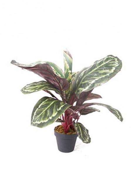 Calathea 50 cm | Korbmarante Kunstpflanze im Topf