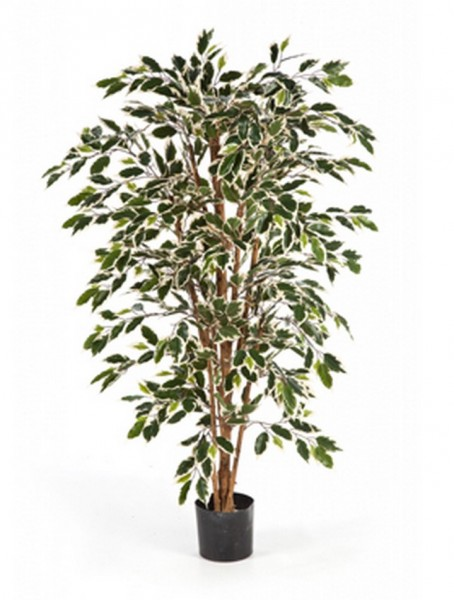 Ficus nitida var.120 cm Kunstpflanze