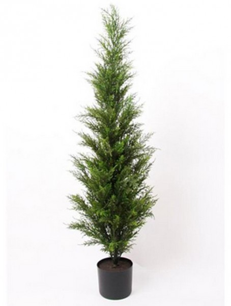 Zeder Baum 120 cm