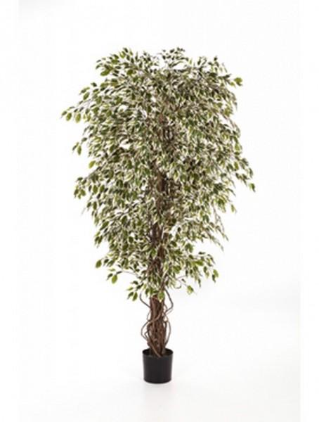 Ficus hawaiian liana var | Kunstbaum