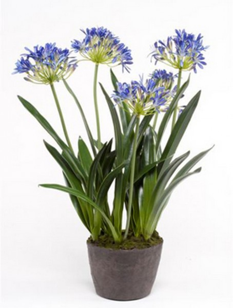 Schmucklilie blau 75 cm | Agapanthus Kunstpflanzen