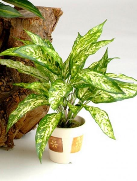 Aglaonema Busch 48 cm | Kunstpflanze
