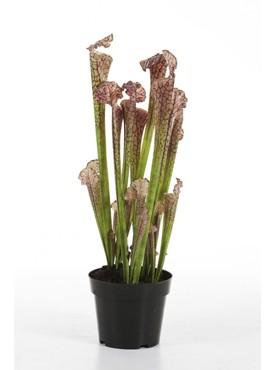 Sarracenia braun 65 cm künstliche Trompetenpflanze