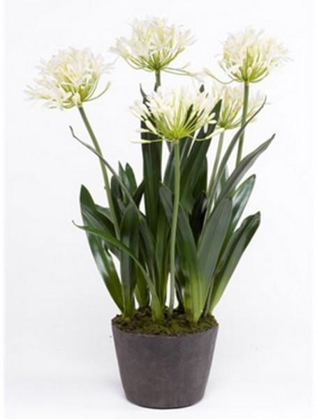 Schmucklilie cremeweiß 75 cm | Agapanthus Kunstpflanzen
