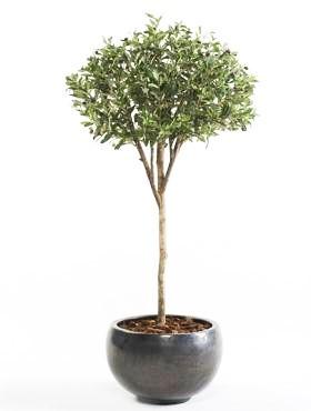 Olivenbaum Parasol 165 cm - Kunstpflanze