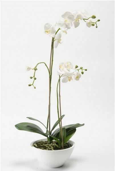 Phalaenopsis in weißer Schale 70 cm - weiße Orchideen Kunstpflanze