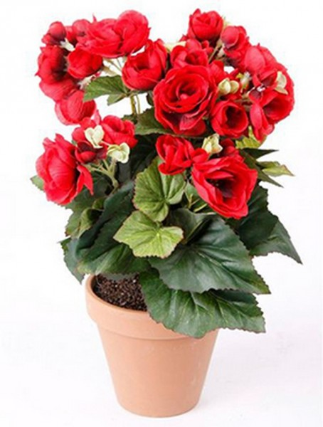 Begonien rot 14 cm | Begonia Kunstpflanze imTopf