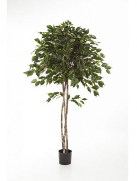 Ficus exotica umbrella   Kunstbaum